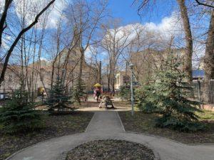 Ситуация с вырубкой деревьев в Ивановской горке