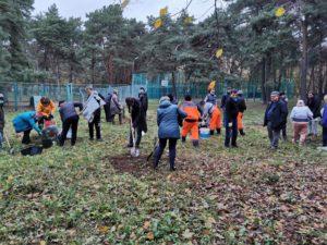 Высажено 71 дерево в СЗАО!